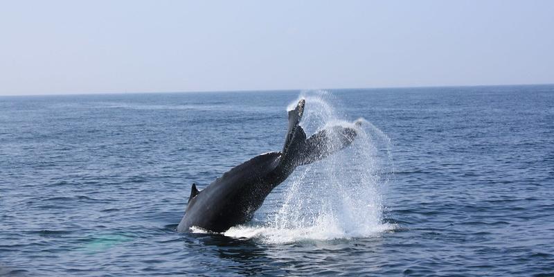 La imagen tiene un atributo ALT vacío; su nombre de archivo es ballena-en-el-mar.png